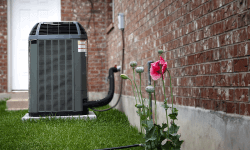 Cleaning Your HVAC Unit from Bird Droppings
